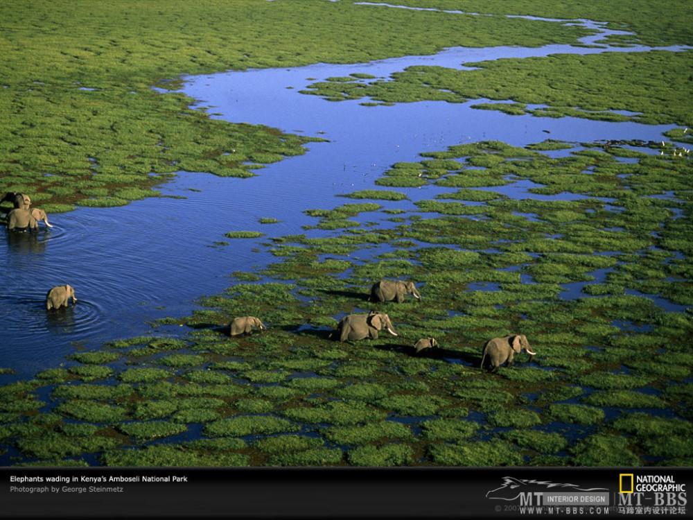 国家地理图片珍藏全集2007_aerial-view-elephants-kenya-981243-lw.jpg