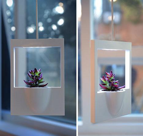 polaroid-living-plant-photograph.jpg