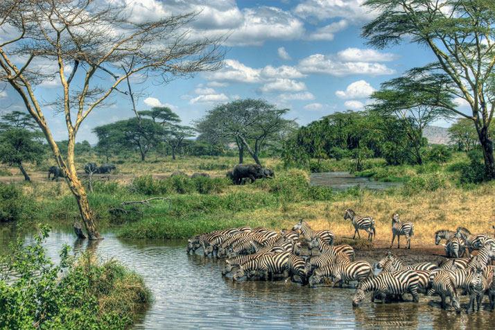 在坦桑尼亚的塞伦盖蒂国家公园