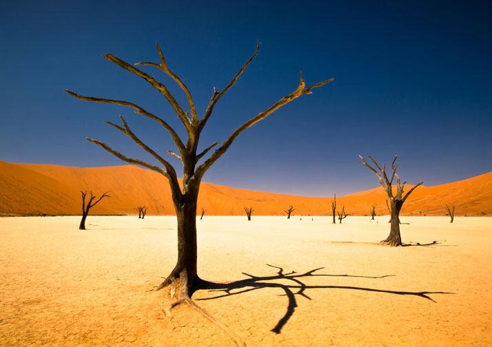 Deadvlei、纳米比亚、非洲。
