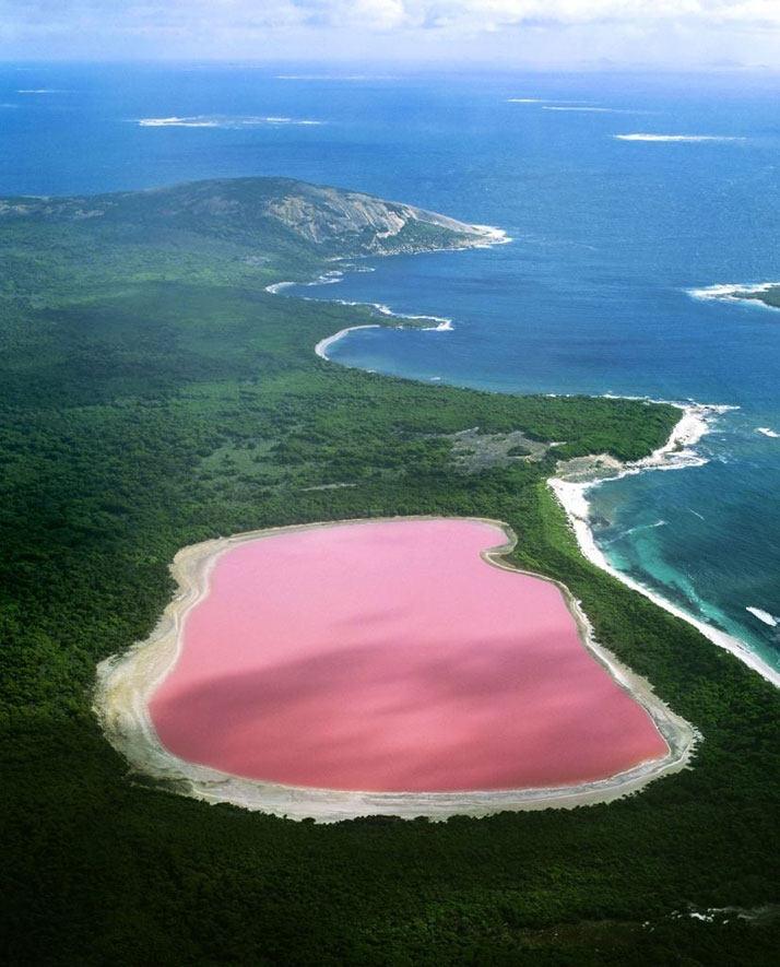 粉红色的湖希勒在澳大利亚西部。