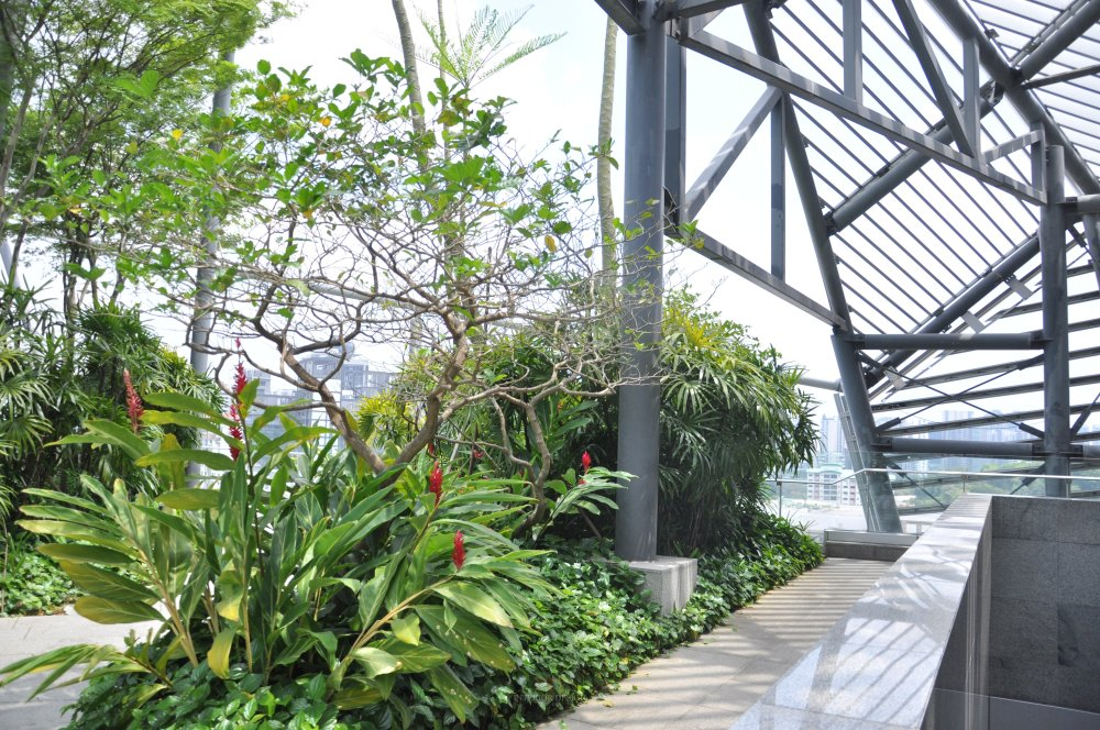 新加坡Orchard Central商业自拍_DSC_0450 (3).JPG