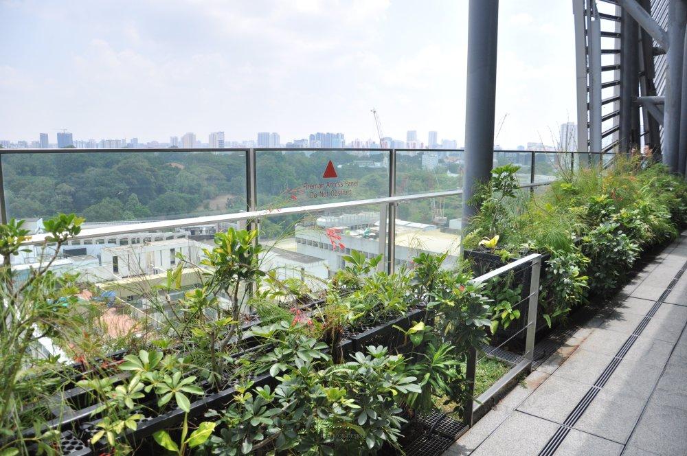 新加坡Orchard Central商业自拍_DSC_0448 (3).JPG