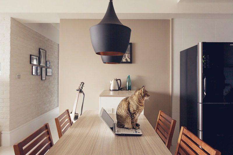 喜欢猫的设计师进,以喵会友!_cat (3).jpg