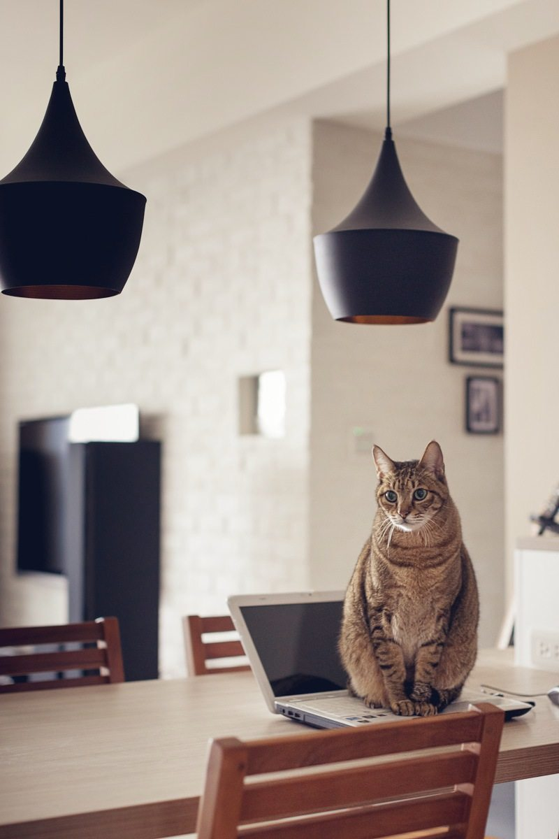 喜欢猫的设计师进,以喵会友!_cat (6).jpg