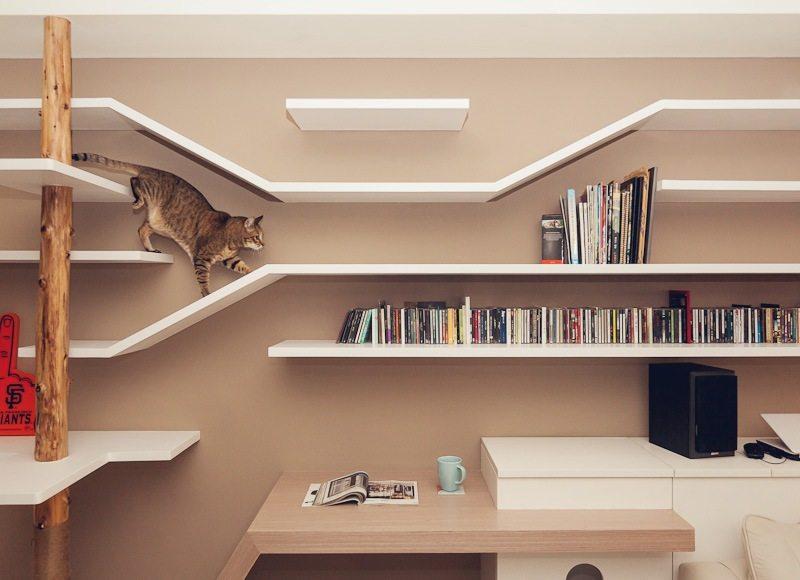 喜欢猫的设计师进,以喵会友!_cat (8).jpg