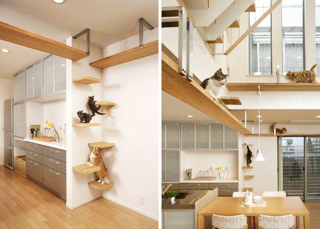 喜欢猫的设计师进,以喵会友!_cat (10).jpg