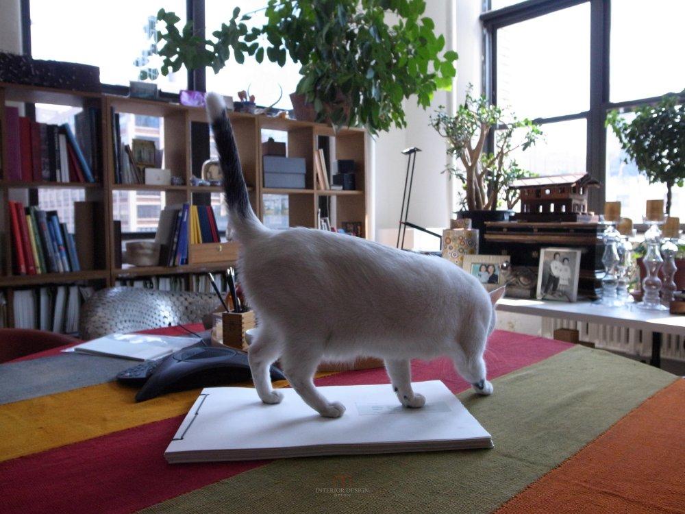 喜欢猫的设计师进,以喵会友!_R0012296.jpg
