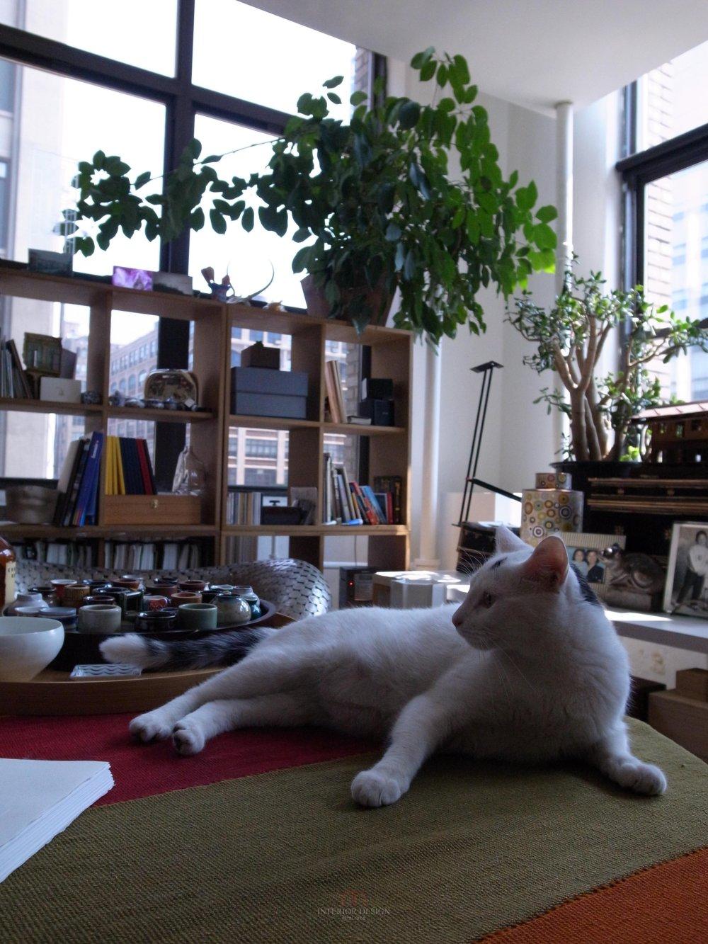喜欢猫的设计师进,以喵会友!_R0012297.jpg