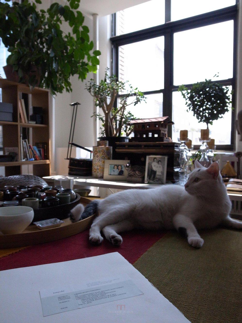 喜欢猫的设计师进,以喵会友!_R0012299.jpg