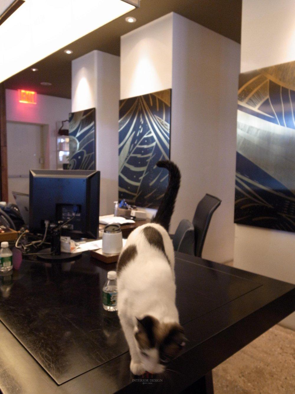 喜欢猫的设计师进,以喵会友!_R0012271.jpg