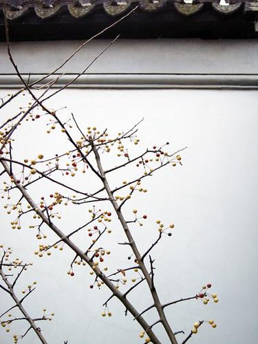 【地平线下的陈设】中国古典园林_e42c544f95d7b9b5505416aed436d12b.jpg