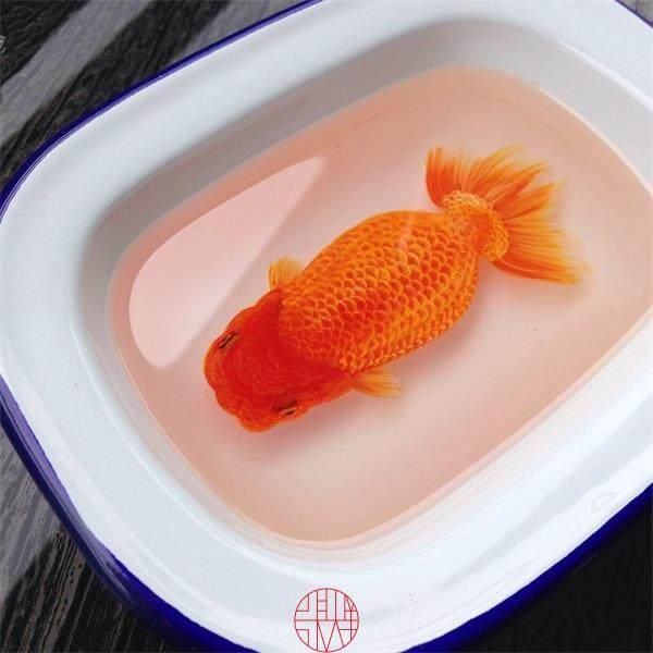看看大师是如何画金鱼的_mmexport1413602476475.jpg