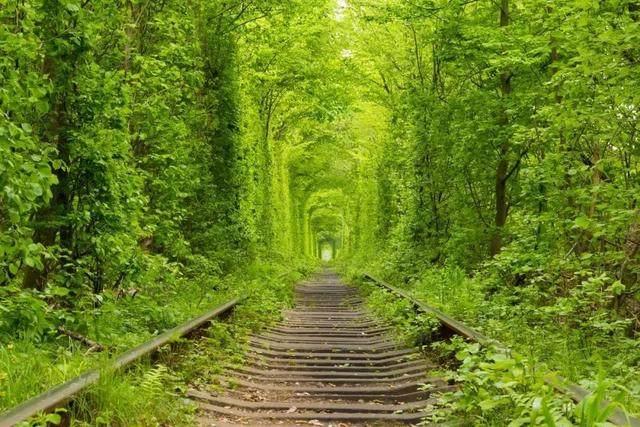 去了呼伦贝尔才知道,什么叫铺天盖地的绿意和天高地阔的自由-7.jpg