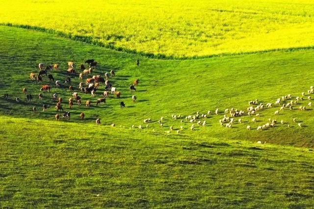 去了呼伦贝尔才知道,什么叫铺天盖地的绿意和天高地阔的自由-12.jpg