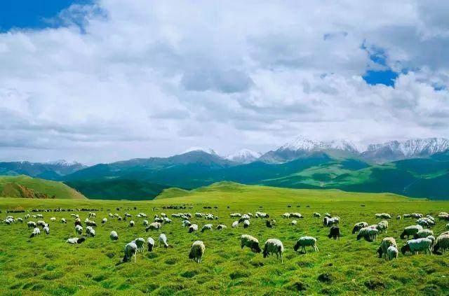"""这些让人欲罢不能的自驾天路,是新疆最超值的""""景点""""-9.jpg"""