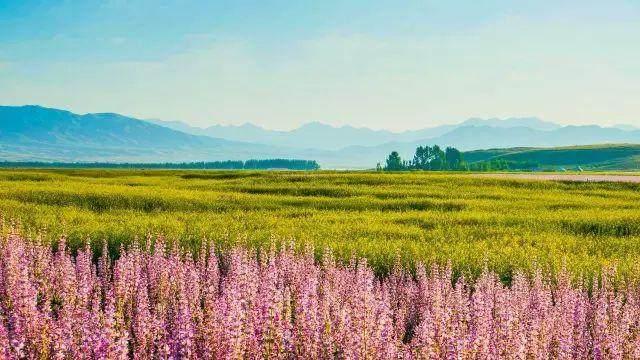 """这些让人欲罢不能的自驾天路,是新疆最超值的""""景点""""-23.jpg"""