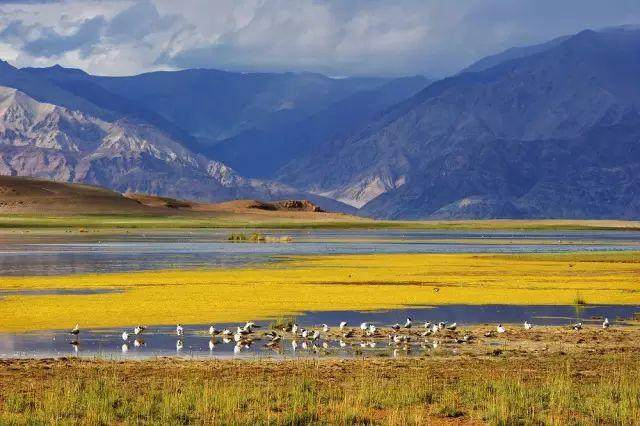 """这些让人欲罢不能的自驾天路,是新疆最超值的""""景点""""-54.jpg"""