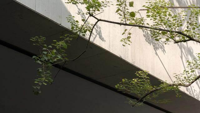 重庆万科:极简 夯土,容纳着万境的沉静灵魂-6.jpg