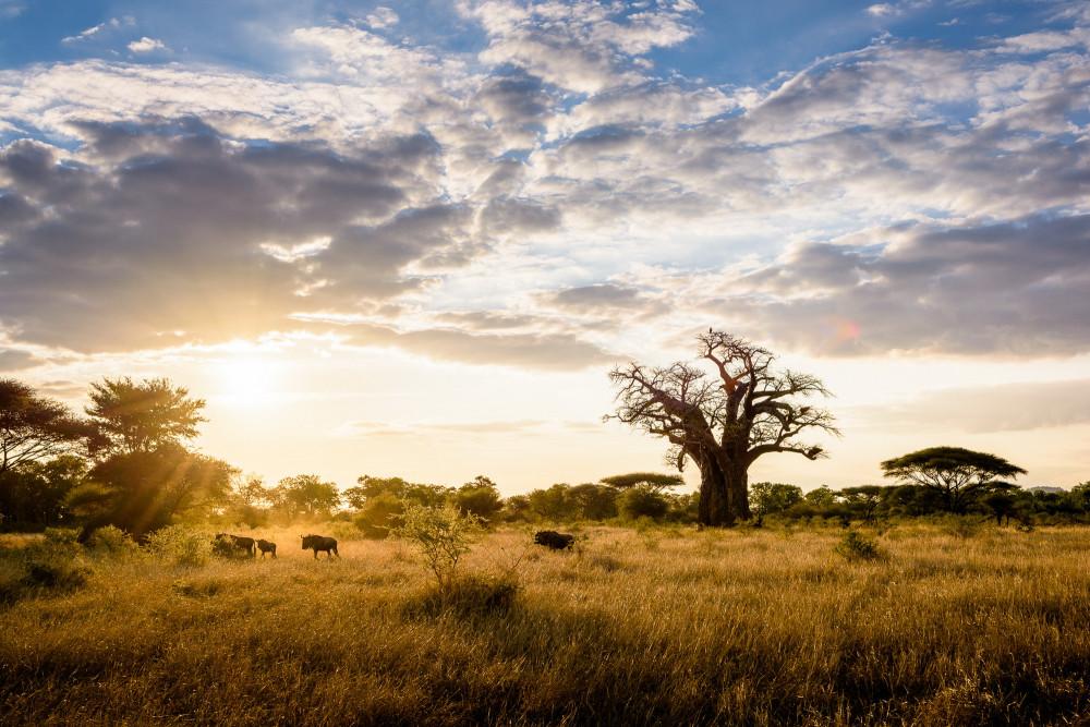 SingitaPamushana-Landscape2.jpg