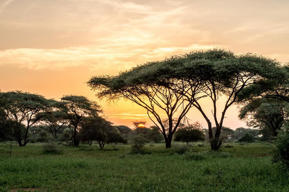 SingitaPamushana-Landscape15.jpg