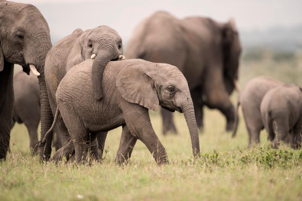 SingitaGrumetigamedrive-elephants-1-35.jpg
