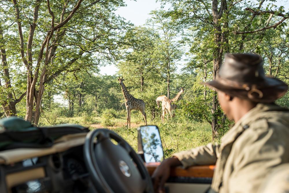 SingitaPamushanaWildlife-Giraffe-24.jpg