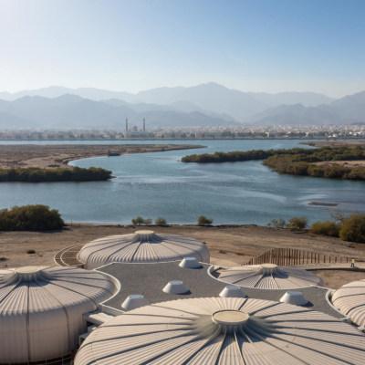 阿联酋卡尔巴红树林保护区海龟保护馆|2021|Hopkins Architects