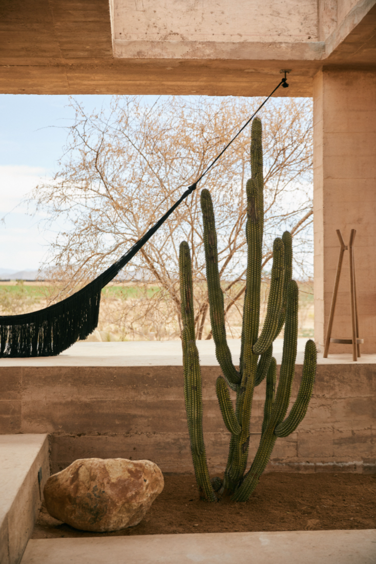 Hotel-Weekend-Barefoot-Luxury-Paradero-Hotel-Mexico-Cactus.png