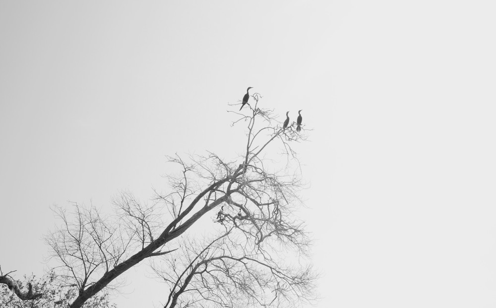 escondido-nature-006-03-n.jpg