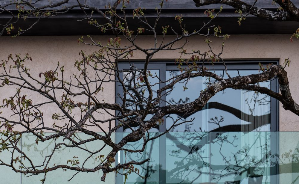 06建筑外观与古树.jpg